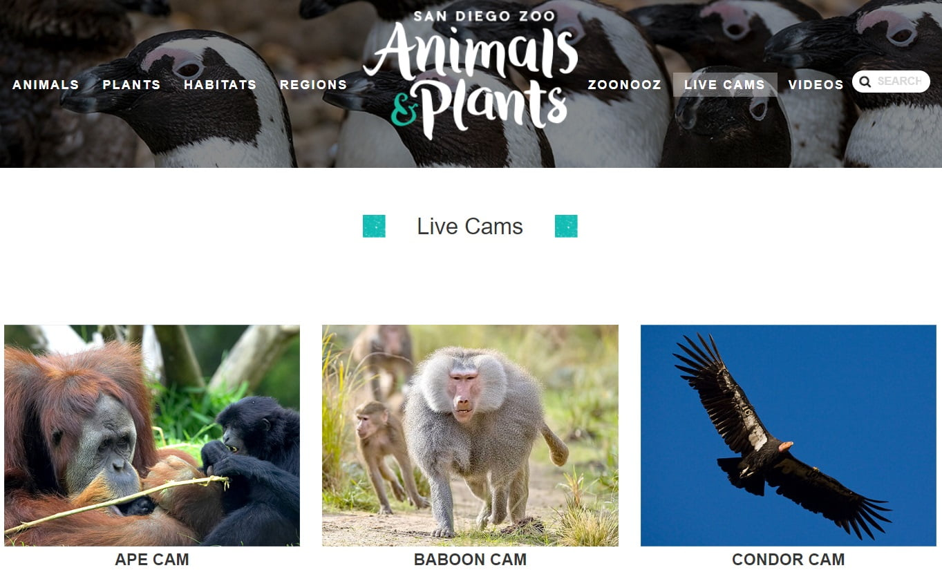 San Diego Zoo - Patient Resource Page