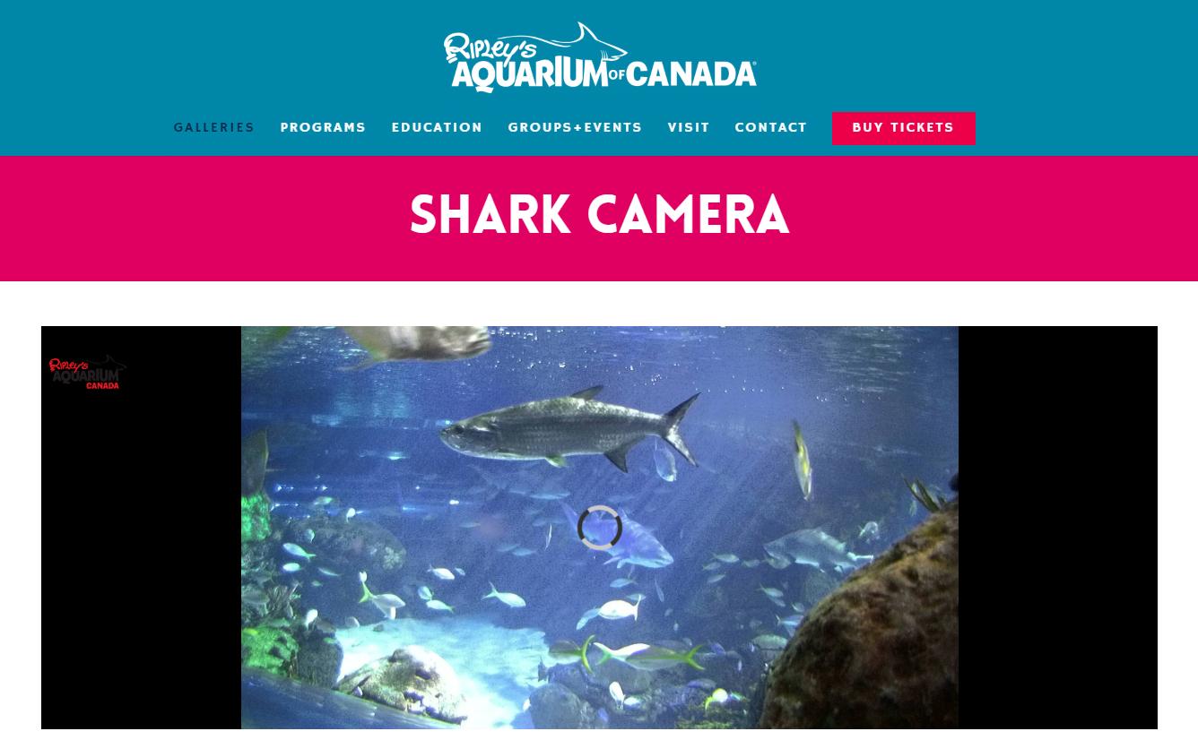Ripley's Aquarium of Canada - Patient Resource Page
